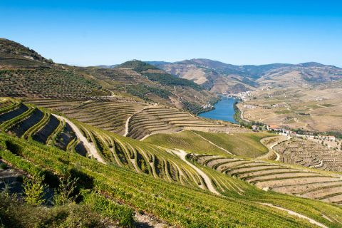 Viaje de Enoturismo por el río Duero